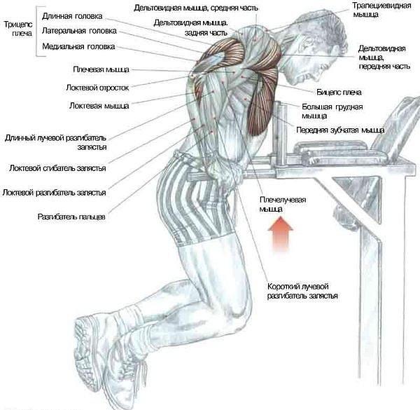 Как качать мышцы груди БОДИБИЛДИНГ УПРАЖНЕНИЯ КАК НАКАЧАТЬ.