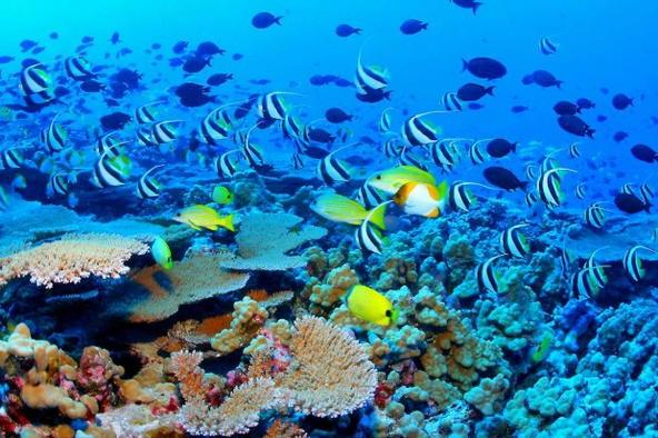 Большой Барьерный риф дайвинг фото