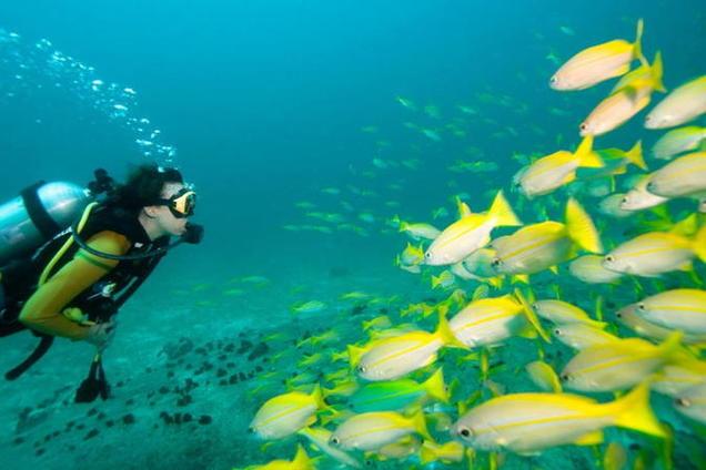 Дайвинг в море