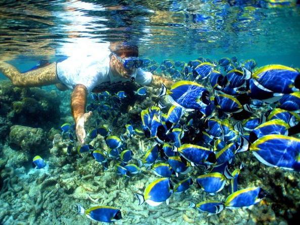 Мальдивские острова дайвинг фото