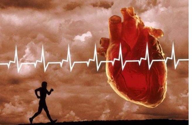 Сердце и легкие в беге